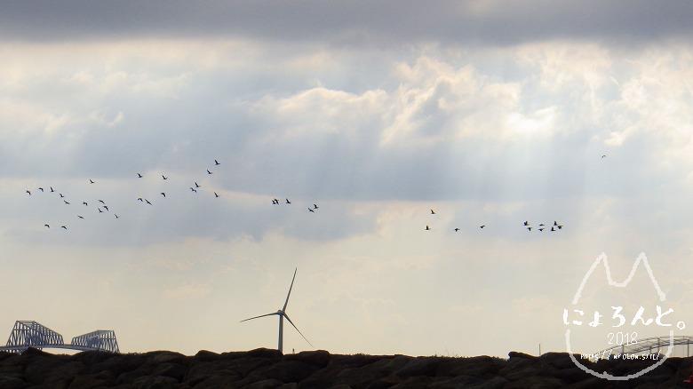 葛西臨海公園・西なぎさ・鳥たち