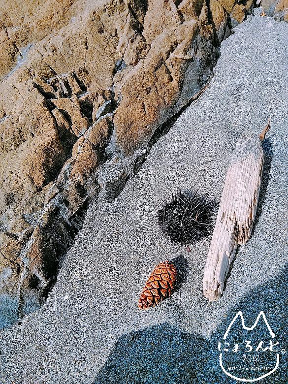 立石海岸・ウニと松ぼっくり