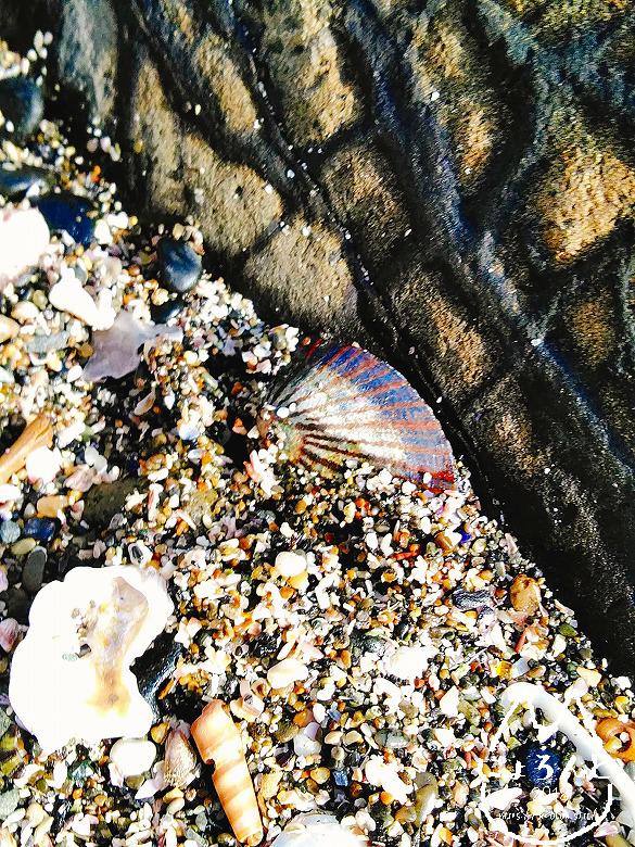 立石海岸・綺麗な貝