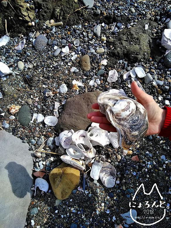 立石海岸・かきの貝殻
