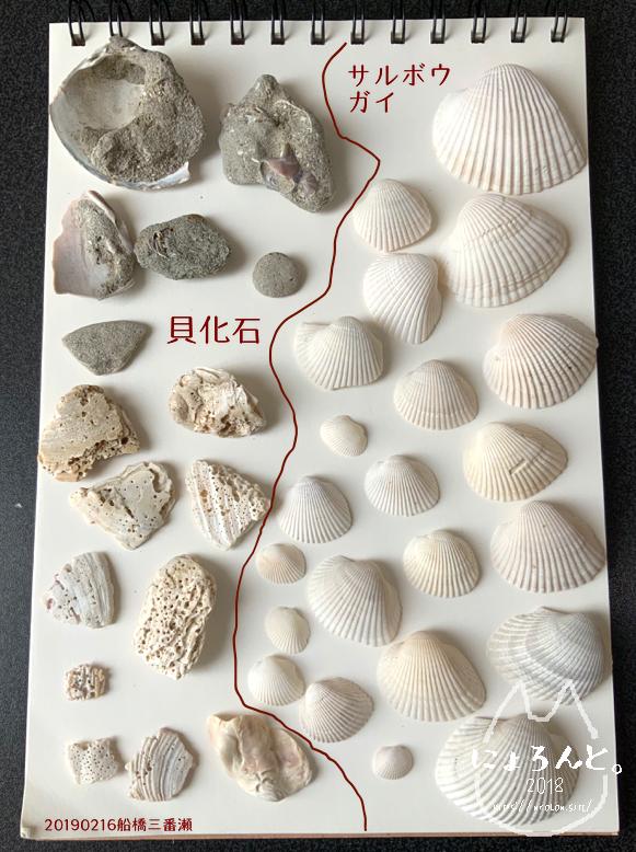 「船橋三番瀬」で拾った石で思い出の『私が拾った石図鑑』作り!
