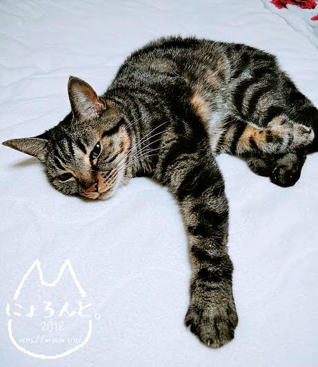 プラバンで簡単ペット型チャーム・選んだ写真