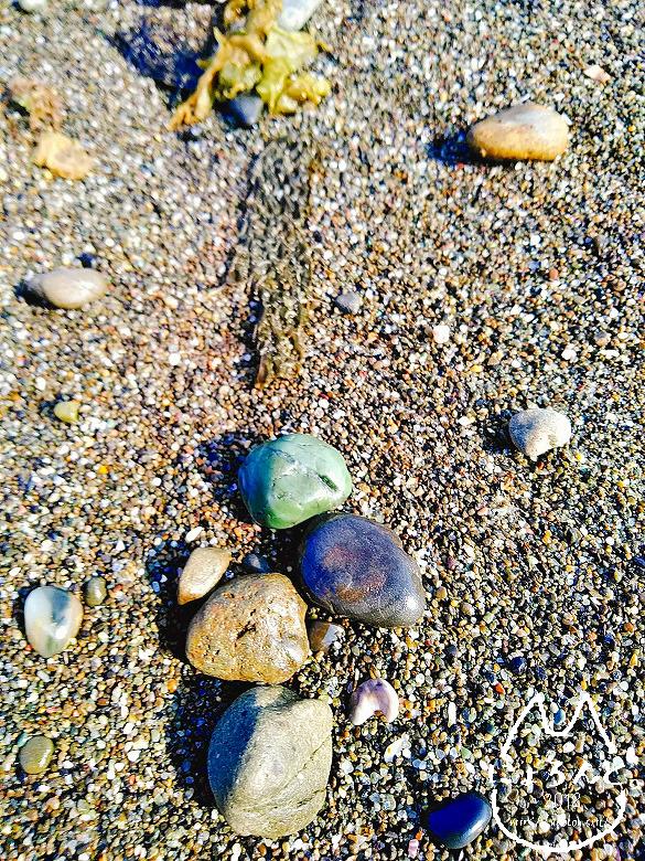 「保田海岸」石