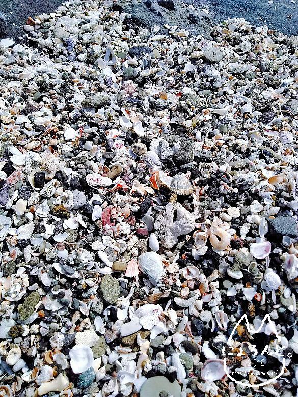 貝で溢れる「沖ノ島海岸」