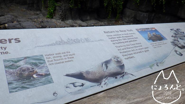 ニューヨーク・セントラルパーク動物園・アザラシ