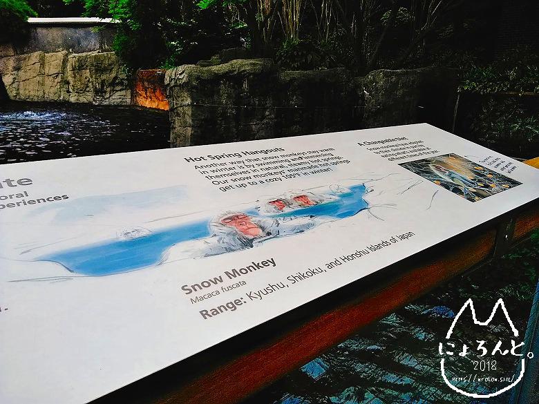 ニューヨーク・セントラルパーク動物園・日本猿