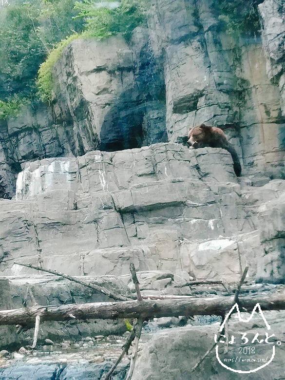ニューヨーク・セントラルパーク動物園・ひぐま