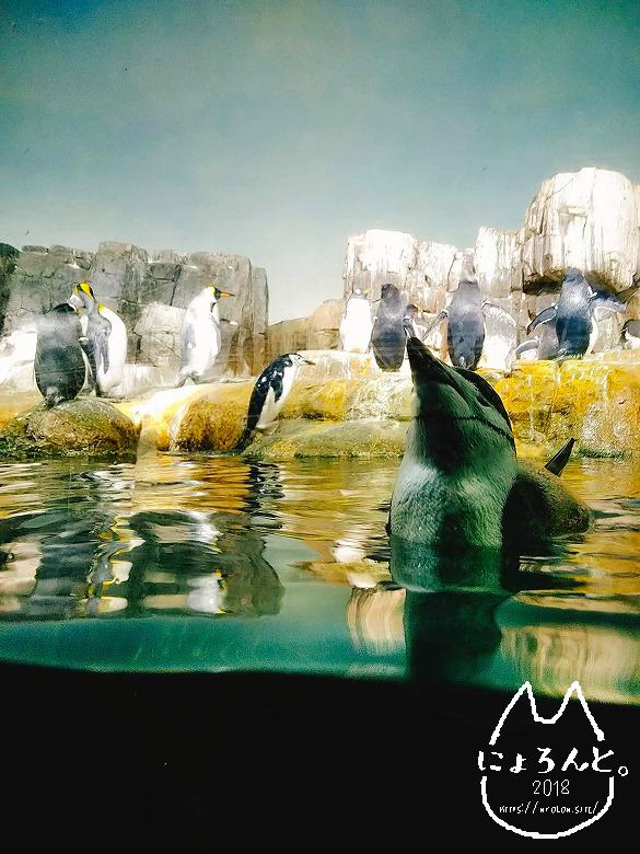 ニューヨーク・セントラルパーク動物園・ペンギン