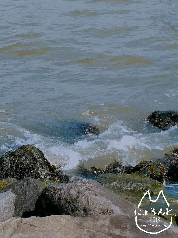ペブル・ビーチ・海藻