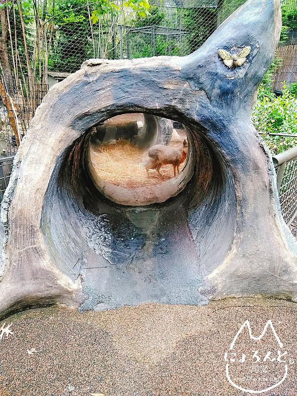 ニューヨーク・セントラルパーク動物園・子供動物園