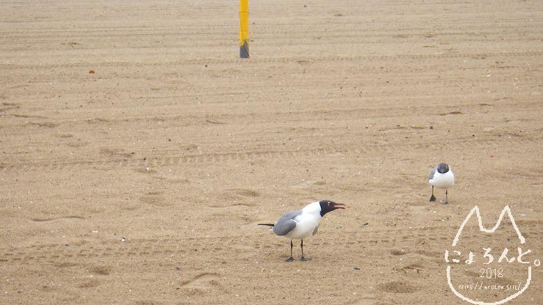 コニーアイランドビーチ・鳥