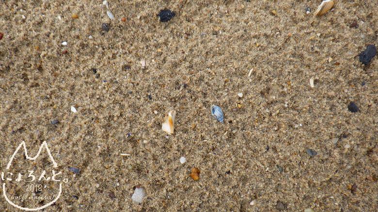 コニーアイランドビーチ・巻貝