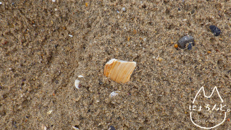 コニーアイランドビーチ・貝殻