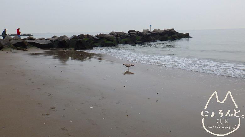 コニーアイランドビーチ・防波堤