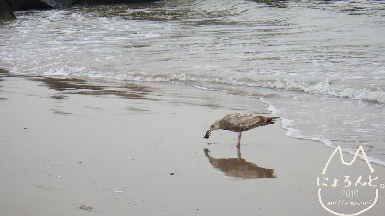 コニーアイランドビーチ・カニを捕まえた鳥