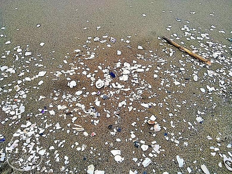 冬の幕張海岸2020・浜