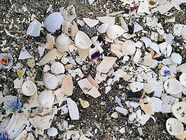 冬の幕張海岸2020・貝殻だらけの浜