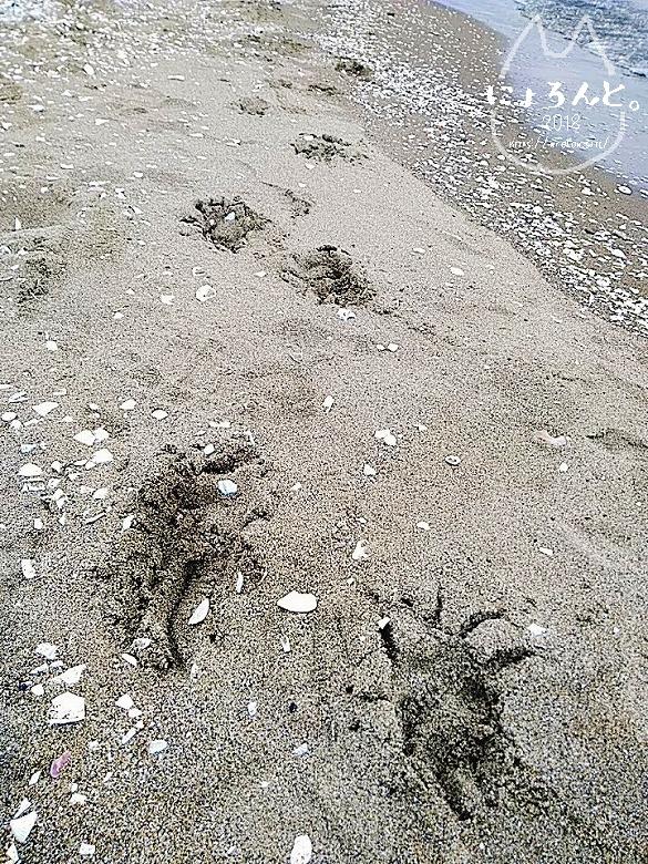 冬の幕張海岸2020・犬の足跡