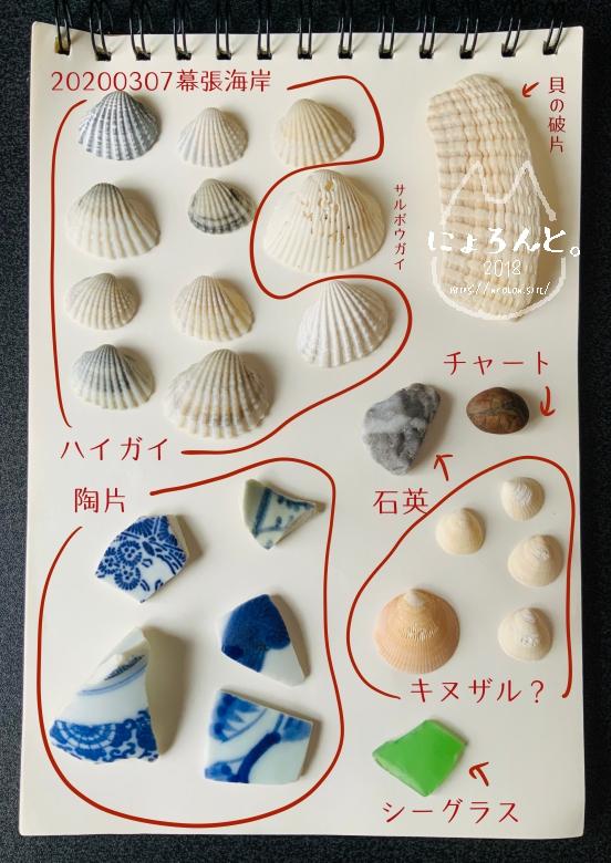 冬の幕張海岸2020・私が拾った貝図鑑