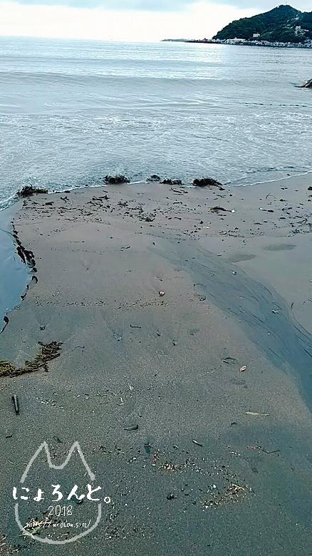 伊豆・長浜海浜公園でビーチコーミング/波打ちぎわ