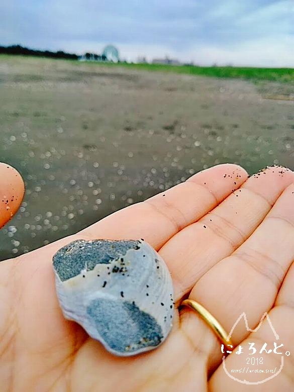 葛西臨海公園でビーチコーミング/貝化石