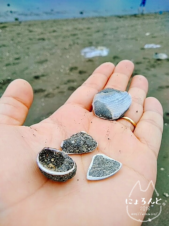 葛西臨海公園でビーチコーミング/貝化石自慢タイム