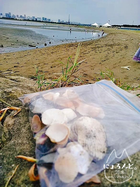 葛西臨海公園でビーチコーミング/拾った貝