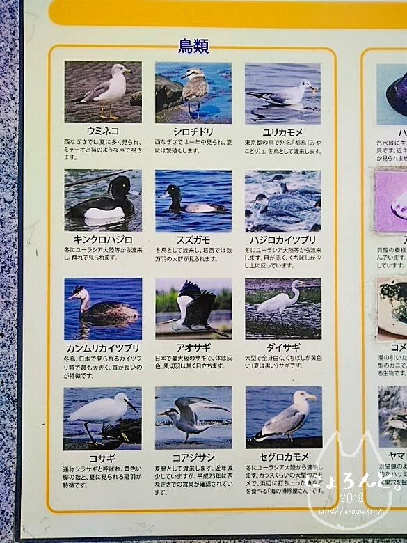 葛西臨海公園でビーチコーミング/鳥看板