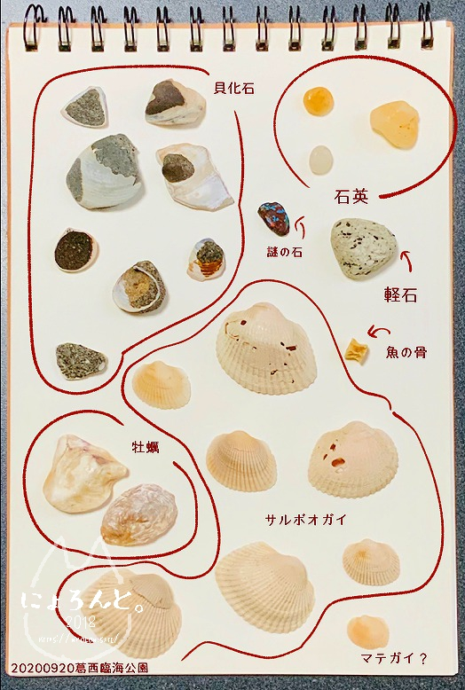 「葛西臨海公園」で拾った貝で思い出の『私が拾った貝図鑑』作り・2020
