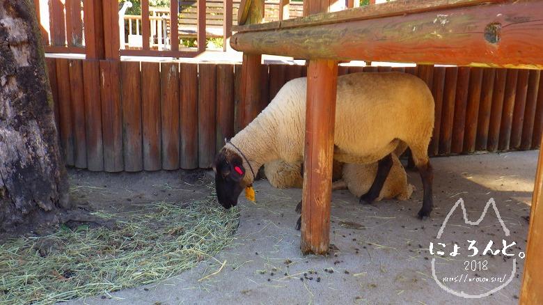 東武動物公園/羊