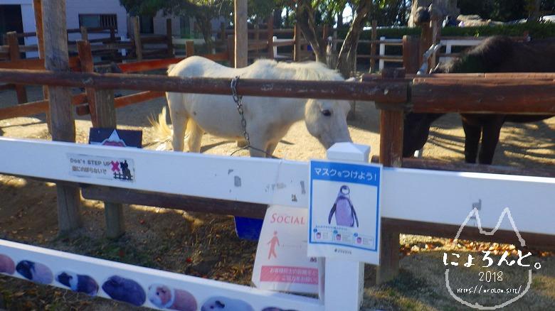 東武動物公園/ポニー