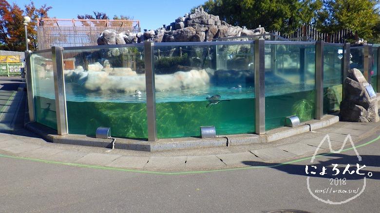 東武動物公園/ペンギン