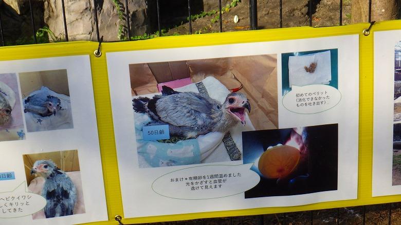 東武動物公園/ヘビクイワシ
