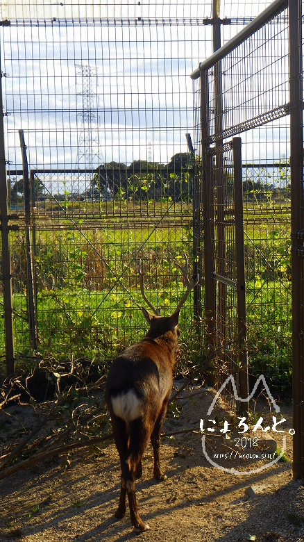東武動物公園/鹿