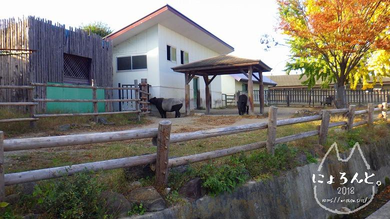 東武動物公園/バク