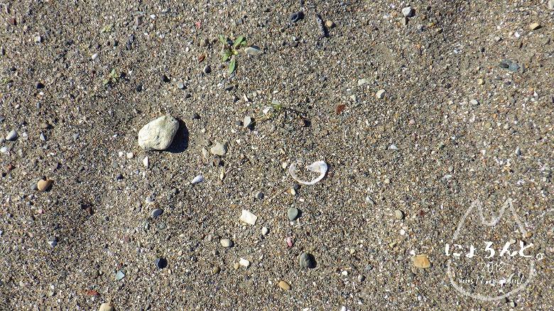 森戸海岸でビーチコーミング/浜のアップ