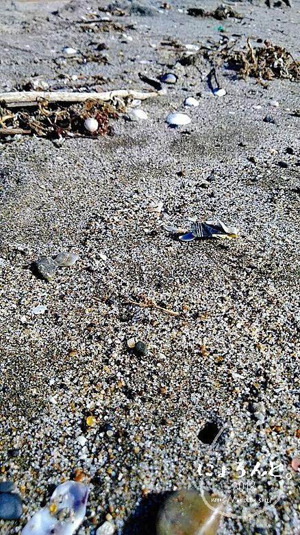 稲毛海岸でビーチコーミング/浜のアップ