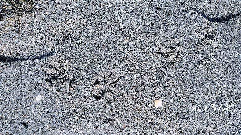 稲毛海岸でビーチコーミング/犬の足跡
