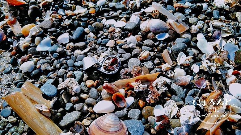 稲毛海岸でビーチコーミング/プルタブ