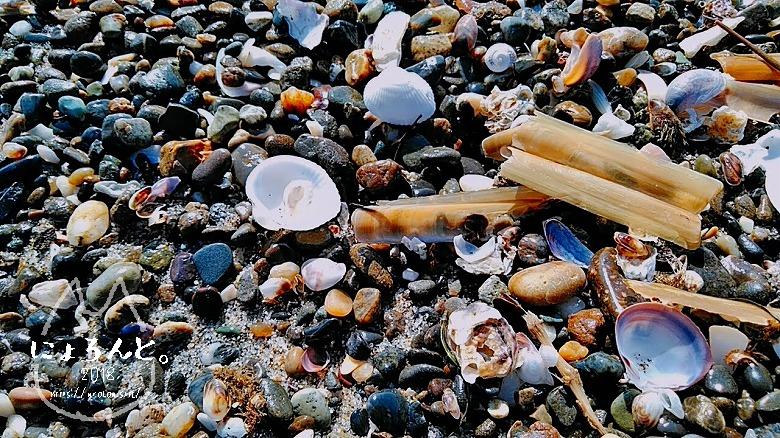稲毛海岸でビーチコーミング/いろんな貝