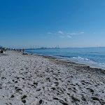 稲毛海岸でビーチコーミング/浜の様子