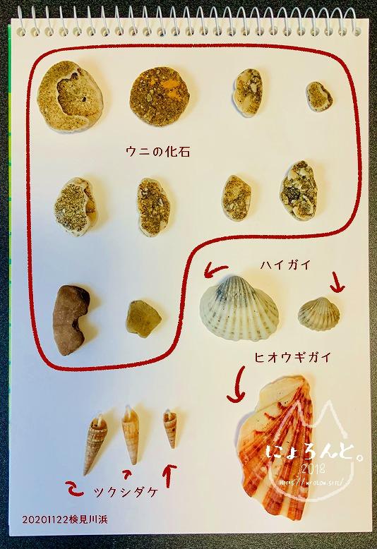 検見川浜でビーチコーミング/貝図鑑