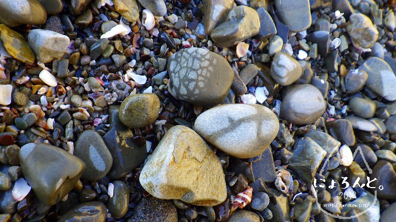 真名瀬海岸でビーチコーミング/石のアップ