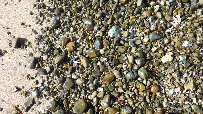 真名瀬海岸でビーチコーミング/浜の石