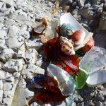 真名瀬海岸でビーチコーミング/選別タイム
