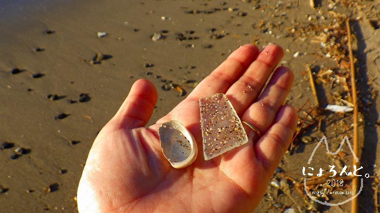 立石海岸でビーチコーミング/シーグラスとトコブシ