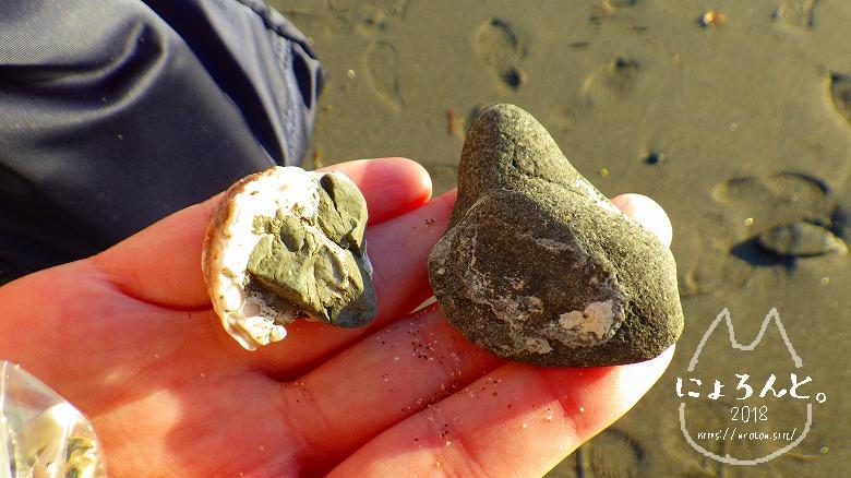 立石海岸でビーチコーミング/化石…?