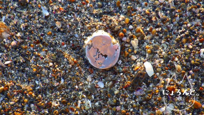 立石海岸でビーチコーミング/瓶の蓋