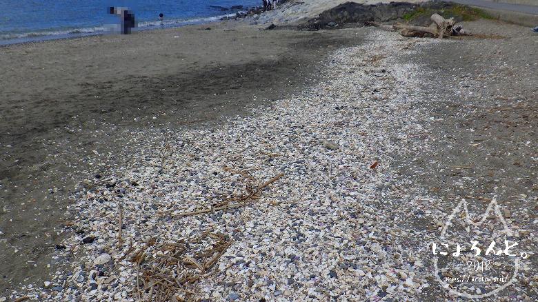 検見川浜でビーチコーミング/白い帯