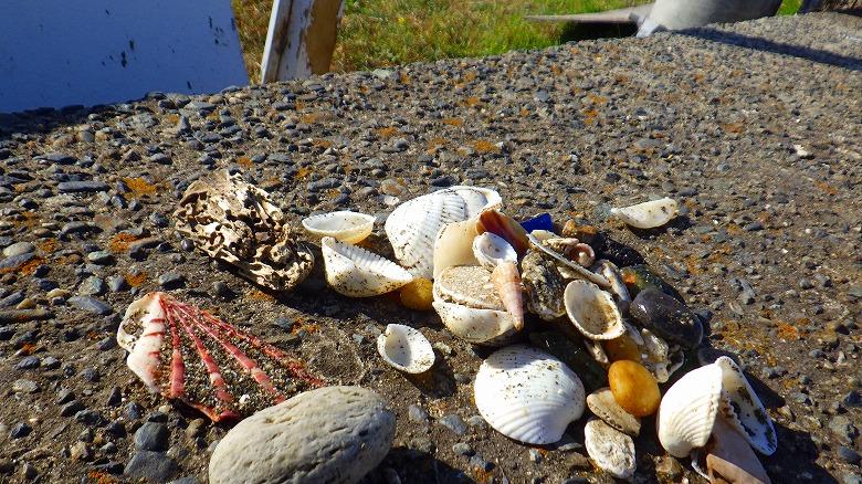 検見川浜でビーチコーミング/選別タイム
